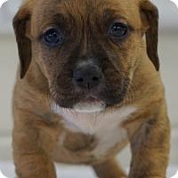 Adopt A Pet :: Candy - Carteret/Eatontown, NJ