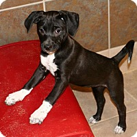 Adopt A Pet :: Gala - Towson, MD