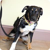 Adopt A Pet :: Willow - Waldorf, MD