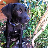 Adopt A Pet :: Remy - San Diego, CA