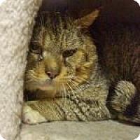 Adopt A Pet :: Oscar - Medford, MA