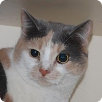 Adopt A Pet :: Janessa - Brooklyn, NY