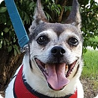 Adopt A Pet :: Jasmine - Bloomington, IL