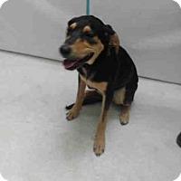 Adopt A Pet :: BELLE - Orlando, FL