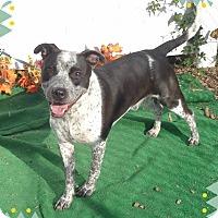 Adopt A Pet :: WILLY - Marietta, GA