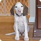 Adopt A Pet :: Baby Katie