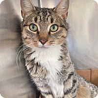 Adopt A Pet :: Madison - Trinidad, CO