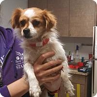 Adopt A Pet :: Zena - Ottawa, KS