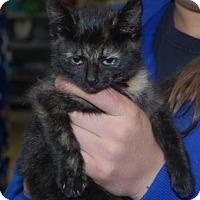 Adopt A Pet :: Hawthorne - Brooklyn, NY