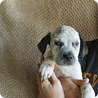 Adopt A Pet :: Cairo - Oviedo, FL