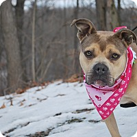 Adopt A Pet :: Mera - New Castle, PA