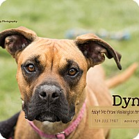 Adopt A Pet :: Dyna - Eighty Four, PA