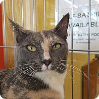 Adopt A Pet :: Bella - Edgewater, NJ