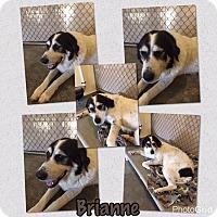 Adopt A Pet :: Brianne - Folsom, LA