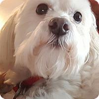 Adopt A Pet :: Moose/Randy - Yukon, OK