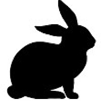 Adopt A Pet :: Phoebe - Farmington Hills, MI