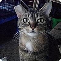 Adopt A Pet :: Badger - Toronto, ON