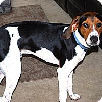 Adopt A Pet :: Cooper - Gig Harbor, WA