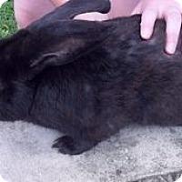 Adopt A Pet :: Desmond - Maple Shade, NJ