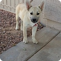 Adopt A Pet :: JoJo - Only $95 adoption! - Litchfield Park, AZ