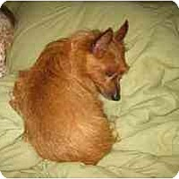 Adopt A Pet :: Quade - Seymour, CT