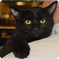 Adopt A Pet :: Cosby - Monroe, GA