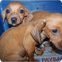 Adopt A Pet :: Bonnie - Sand Springs, OK
