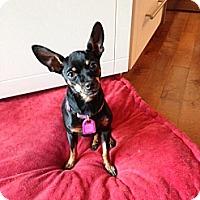 Adopt A Pet :: Maddy - Saskatoon, SK