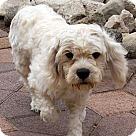 Adopt A Pet :: Risto