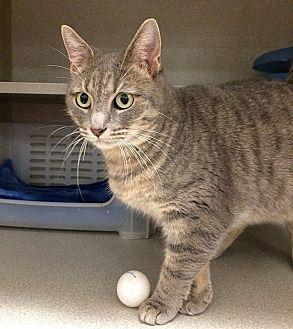 Munchkin Cat Rescue Florida