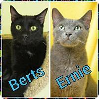 Adopt A Pet :: Ernie 131135 - Atlanta, GA