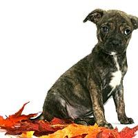 Adopt A Pet :: Olivia - Lufkin, TX