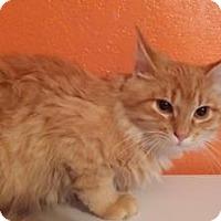 Adopt A Pet :: Raron - Ennis, TX