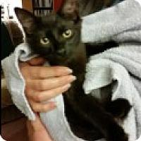 Adopt A Pet :: Drake - Middletown, CT