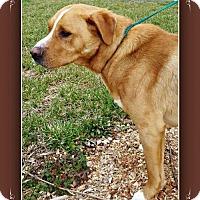 Adopt A Pet :: Marley - Elizabethton, TN