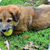 Adopt A Pet :: Shiloh - Foster, RI