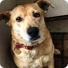 Adopt A Pet :: Lola