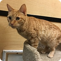 Adopt A Pet :: Nugget - Riverside, CA