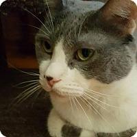 Adopt A Pet :: Sausalito Suzie - Phoenix, AZ