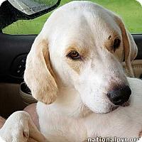 Adopt A Pet :: Doug in LA - new! - Beacon, NY
