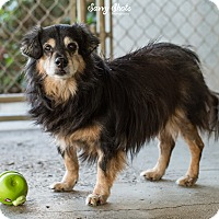 Adopt A Pet :: Hercules - Greensburg, PA
