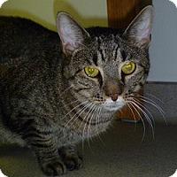 Adopt A Pet :: Leo - Hamburg, NY