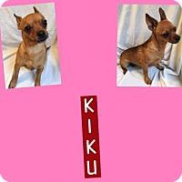 Adopt A Pet :: KIKU - Plano, TX