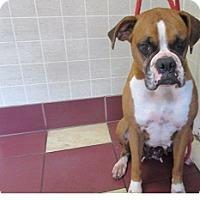 Adopt A Pet :: Chloe - Bartonsville, PA