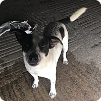 Adopt A Pet :: Jessie - Cuero, TX