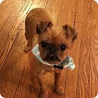 Adopt A Pet :: Percival - St Louis, MO