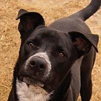 Adopt A Pet :: Nebo - McKinney, TX
