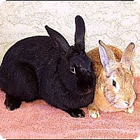 Adopt A Pet :: Butterscotch & Scarlett - Phoenix, AZ