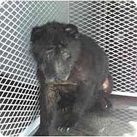 Adopt A Pet :: Cognac - Los Alamitos, CA