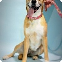 Adopt A Pet :: Princess - Justin, TX
